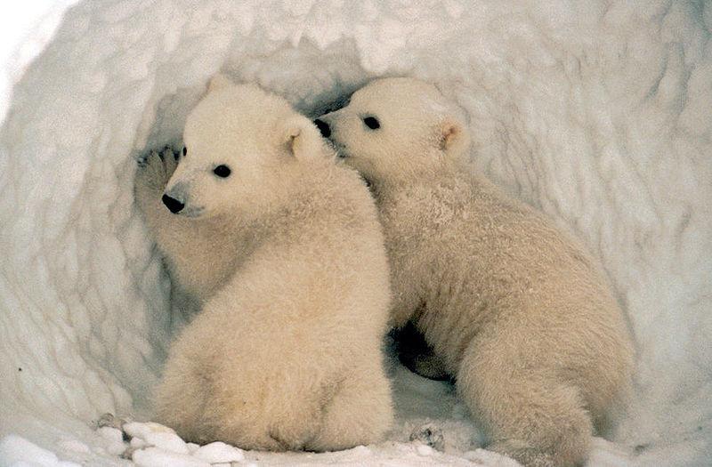 动物为什麼要冬眠